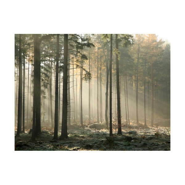 Fototapeta - Foggy November morning
