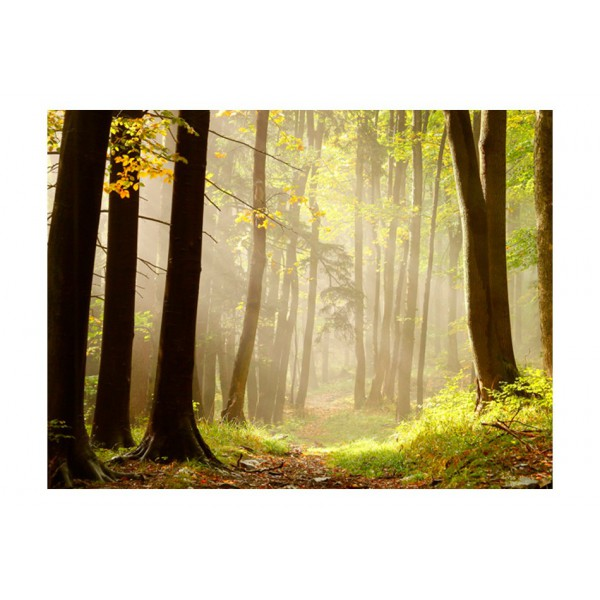 Fototapeta - Mysterious forest path